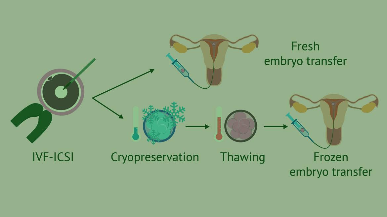 FET (Frozen Embryo Transfer cycles)